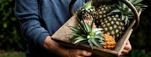 12 Facts about the Pineapple Industry in the Philippines
